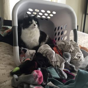Magpie in laundry