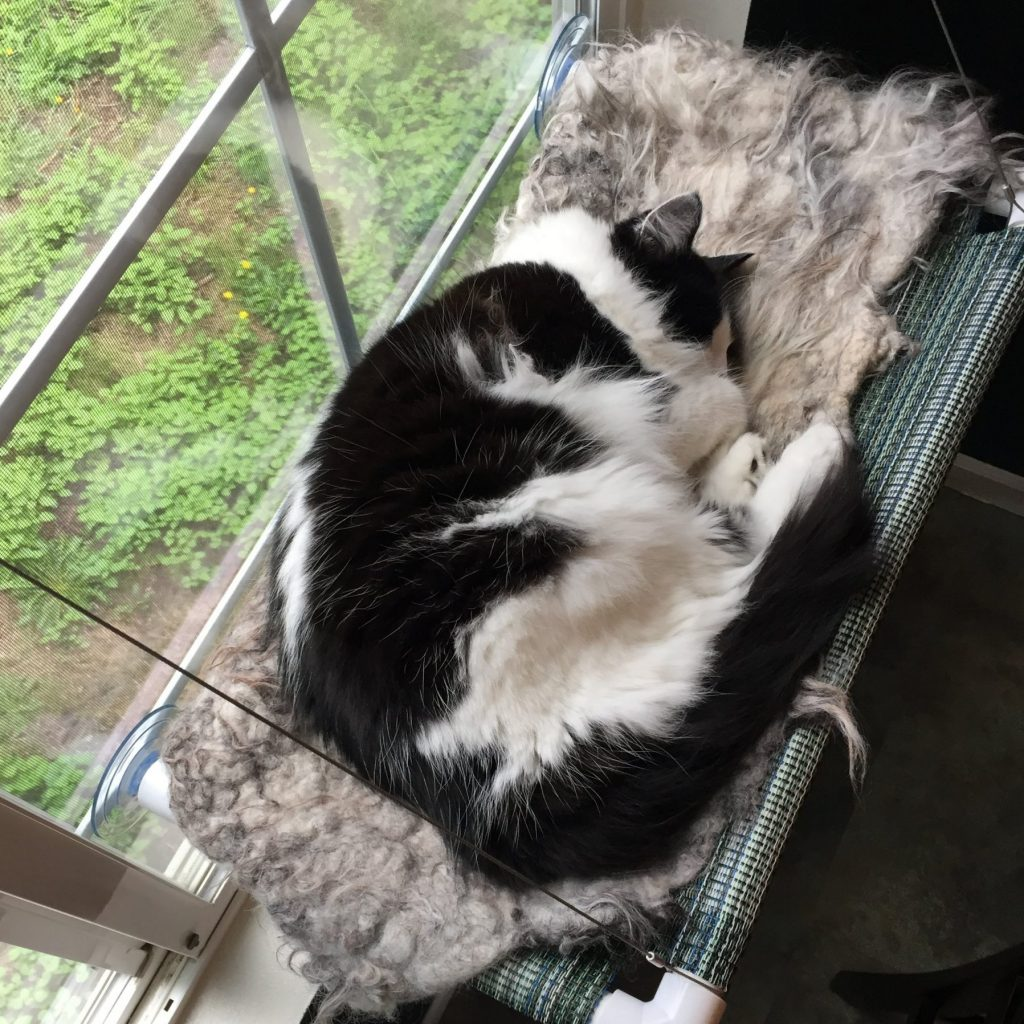 Magpie napping on cot